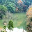 ~ 笹川湖 立ち枯れ木と紅葉 ~