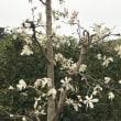 平成を見送る花
