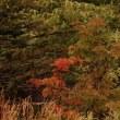 秋忍び寄る…天空の沼