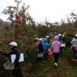 3年生 りんご収穫体験