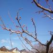 春は足踏み (゜レ゜)