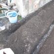 ワケギ定植と大根種蒔畝作りとトマトの後の耕運機掛け