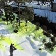 庭木の「煤病」退治実施。