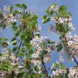 葉桜同時の五浦のお花でしたが
