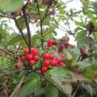 深まる秋味覚の秋温泉欲の秋・・・ブログ更新しました!