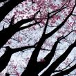 桜が咲き始めたぞ!