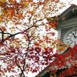 芸術の秋到来!