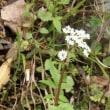 山道で見つけた草花