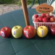 <4年目のリンゴ狩り>