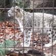 雨上がりの初春の多摩動物公園