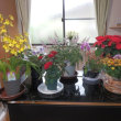 日曜日の朝、事務所の花に水遣り