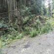 < 先日の台風の大阪の被害について >