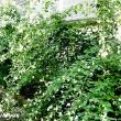 白萩が美しい「花岳院」
