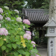 紫陽花苑・新宮八幡