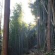 高森町の段丘林の竹林対策