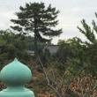 🚶…🐧塔の島…白川…折居台…県神社…171016
