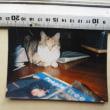 520歩目 本日[猫の肖像画]ヲ届ける。