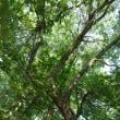 暑い日はブナ林に限る‼️