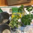 ハイドロ植え替えメモ