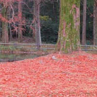紅葉に負けないで咲く花たち