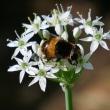 蜜集めに忙しい虫たち