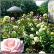 image2546 公園の薔薇2