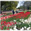 春の陽気に誘われて(^^♪万博公園自然文化園「チューリップの花園」 遠く太陽の塔をバックに
