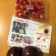 初夏のフルーツ
