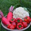 今の時期は、ブロッコリ-にカリフラワ-の収穫です