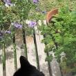 カナヘビと黒猫スミレ