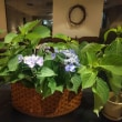今日の喫茶ロアのお花