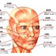 顔の筋肉図