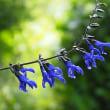 雨上がりの庭の花