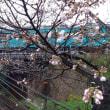 桜の花とJRの列車