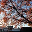 降りそそぐ秋。