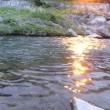 GWの谷間に男鹿川でヤマメ・イワナと遊ぶ