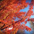 秋の別所沼 2017