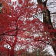 塩原の紅葉も