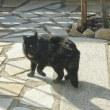 サビ猫さんは我が家のニャンがお気に入り?