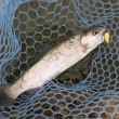 10月2日 Fish On王禅寺