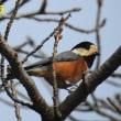 杉村公園の鳥撮り
