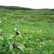 牛留池と畳平