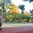 秋色洋館、秋の猫。