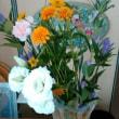 9月1回目の花