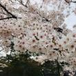 千秋公園観桜会(*^-^*)