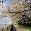 2017年4月13日の隅田川の桜
