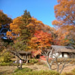 紅葉終盤の町田薬師池公園散策!