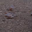 金華鳥(3)