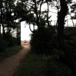 Vol.82  LAST SUMMERS - Chigasaki Beech
