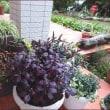 庭で素敵な拾い物★秋色玄関
